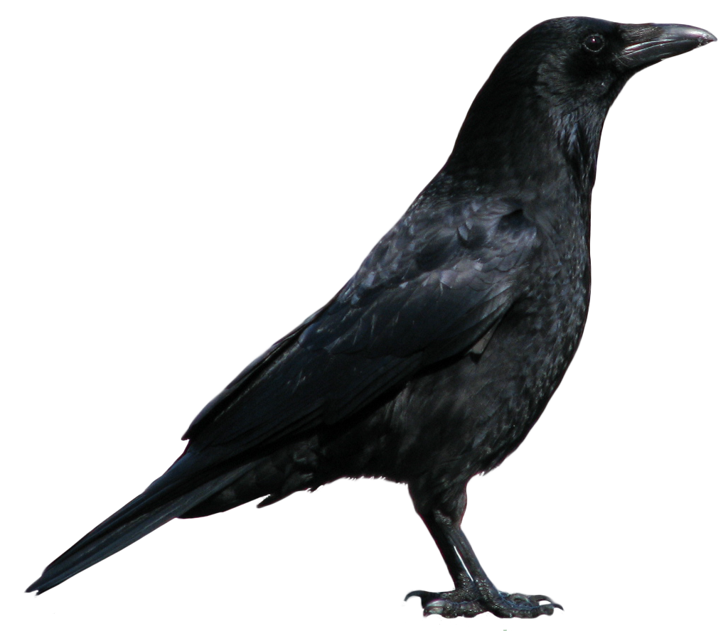 Are You Familiar With The Term   Eat Crow