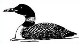 Free Common Loon Clipart