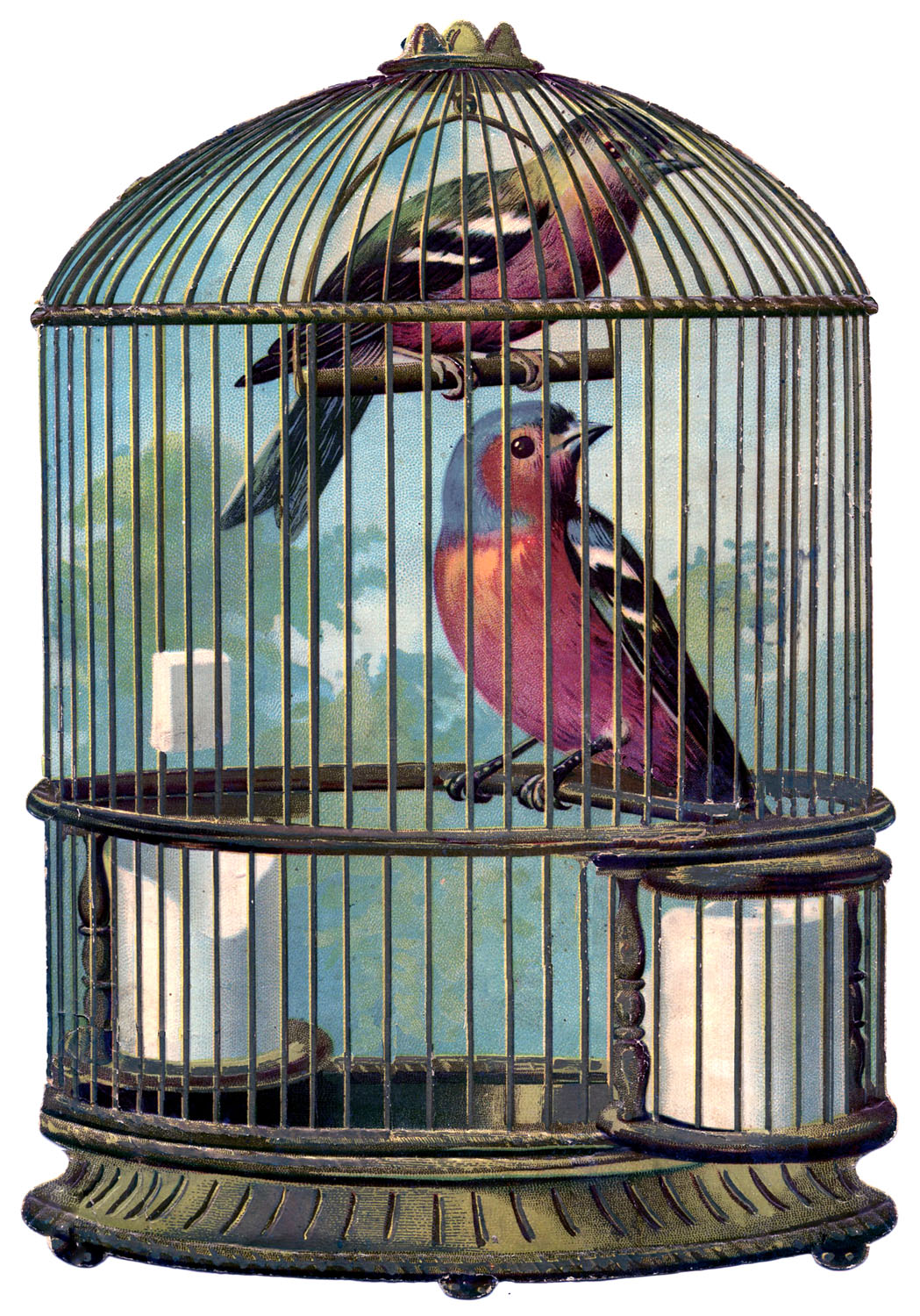 Antique bird cage drawing - photo#23