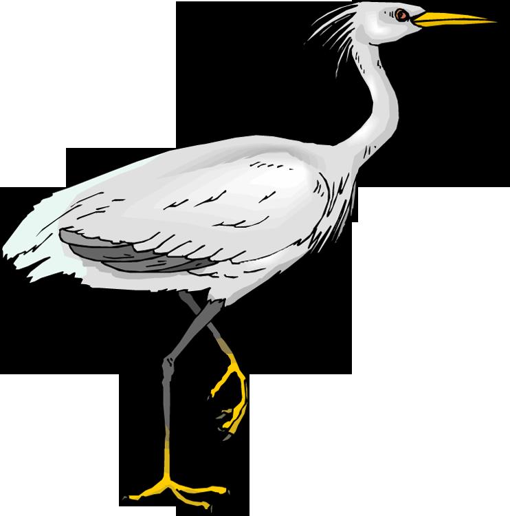 Heron bird clipart