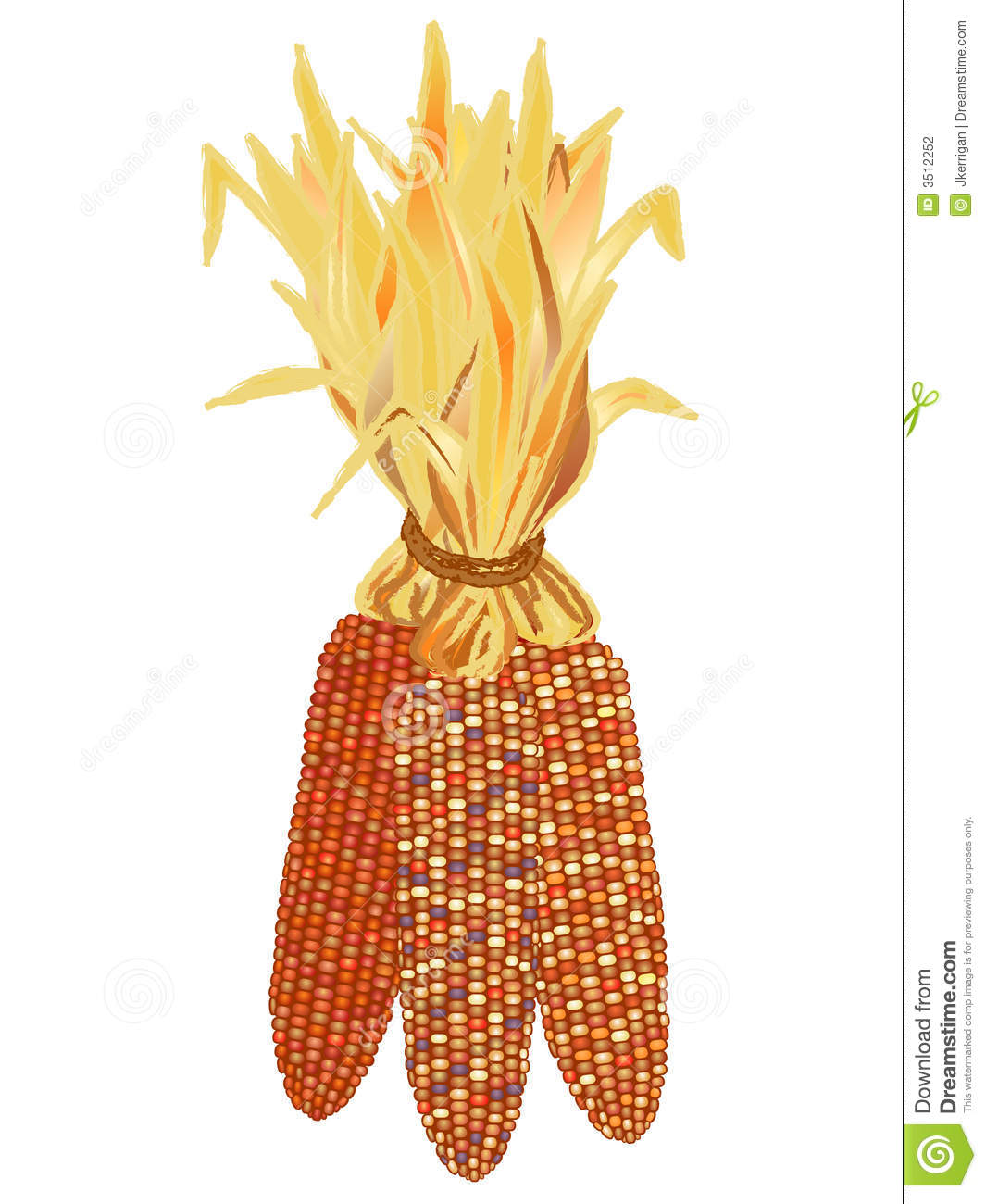 Indian Corn Stock Photography   Image  3512252