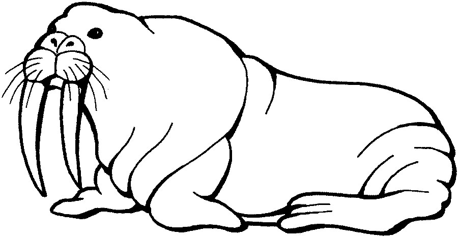 Clip Art Walrus Clipart cartoon walrus clipart kid free cliparts that you can download to computer