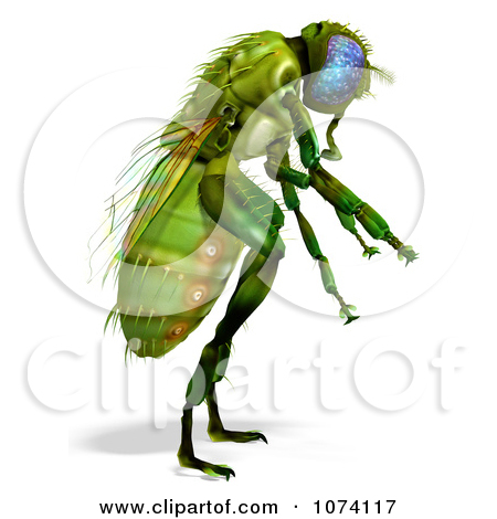 Royalty Free  Rf  Illustrations   Clipart Of Flies  5