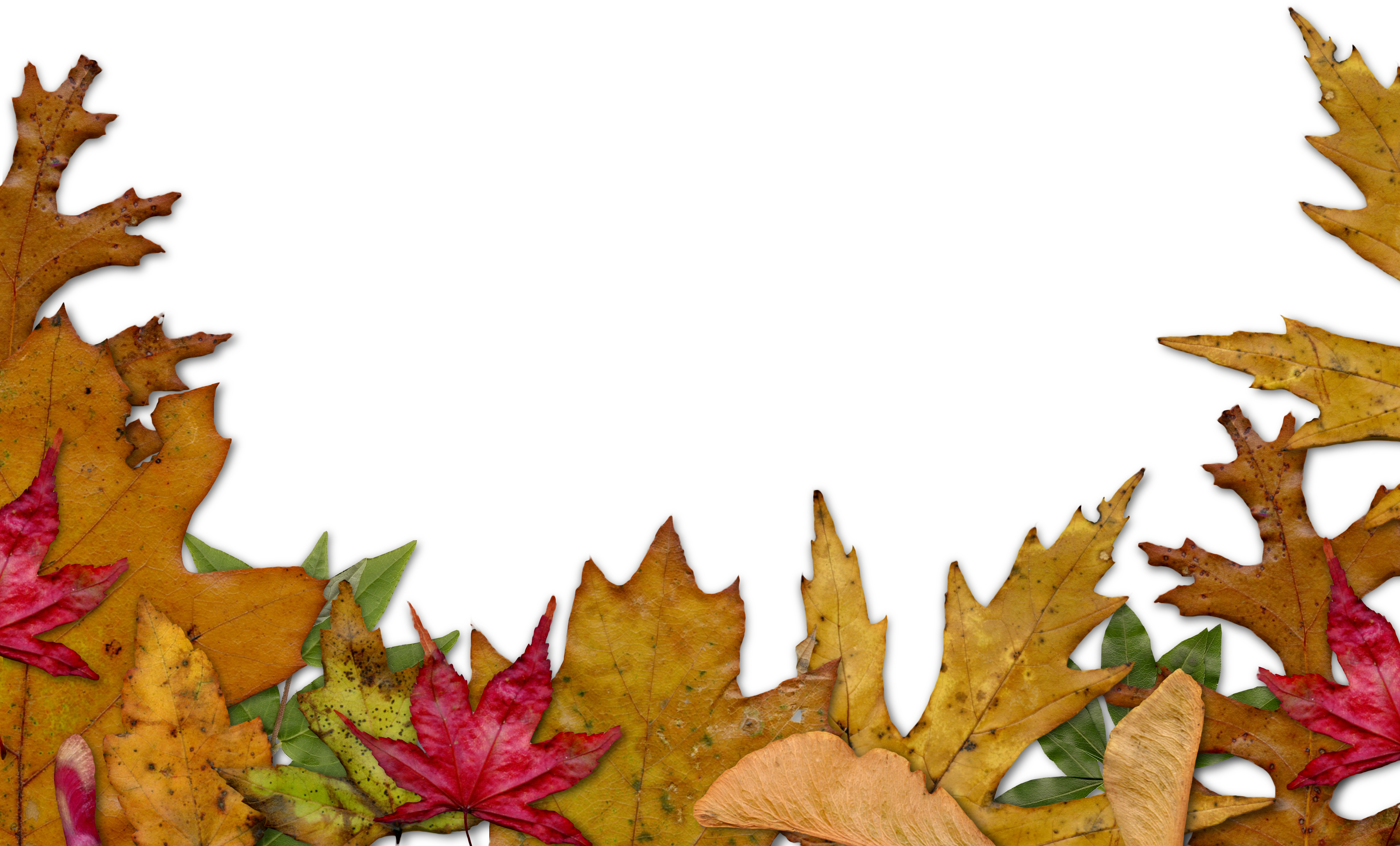 Fall Flower Border Clipart - Clipart Suggest