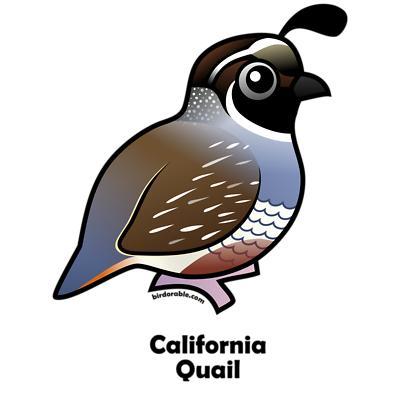 Clip Art Quail Clipart quail clipart kid california gifts women s v neck dark t shirt