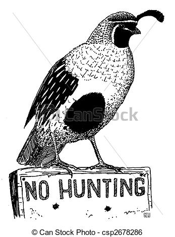Stock Illustration Of Gambels Quail   Male Callipepla Gambelii Pen And