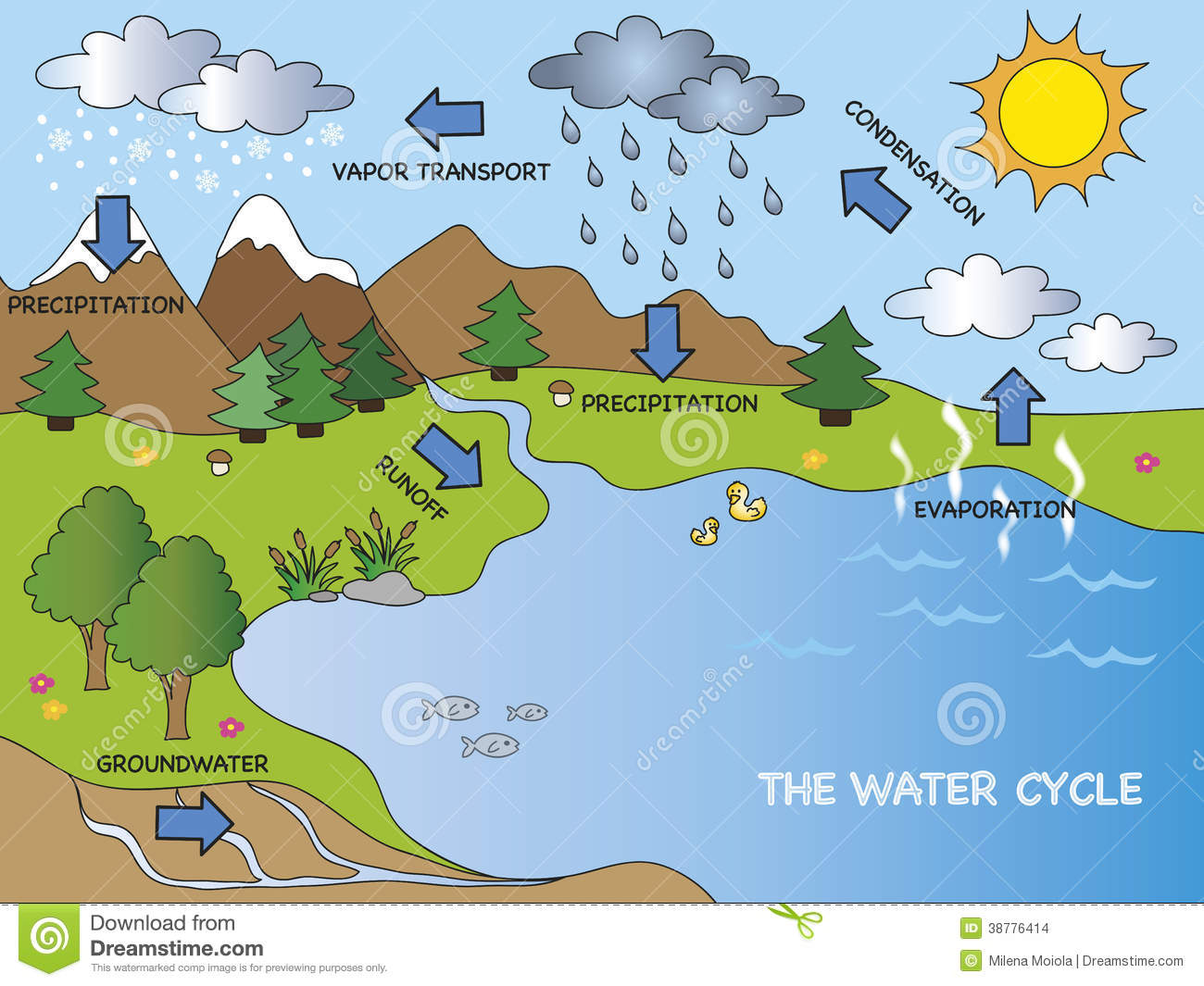 Water Cycle Stock Illustration   Image  38776414