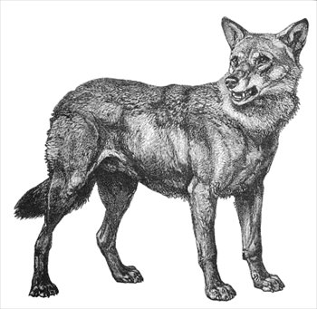 Free Wolf Clip Art Graphics