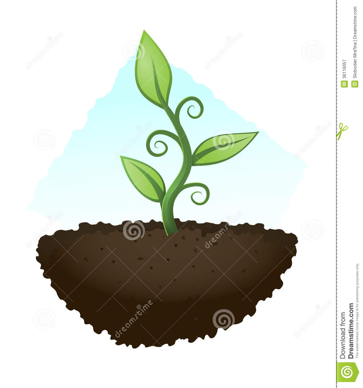 Green Plant Royalty Free Stock Photography   Image  36116057