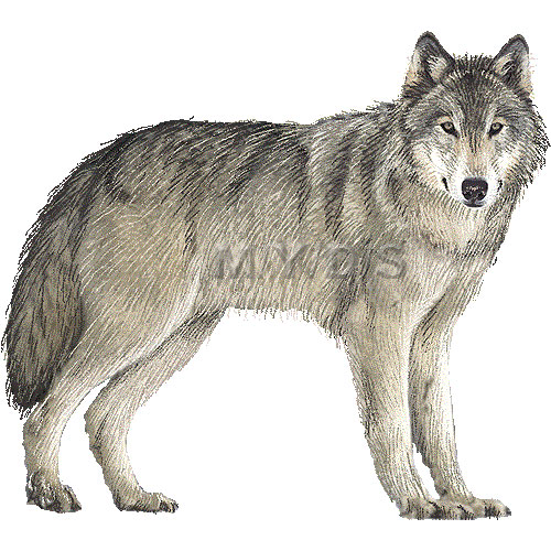 Clip Art Clipart Wolf wolf clipart kid grey gray timber graphics free clip art