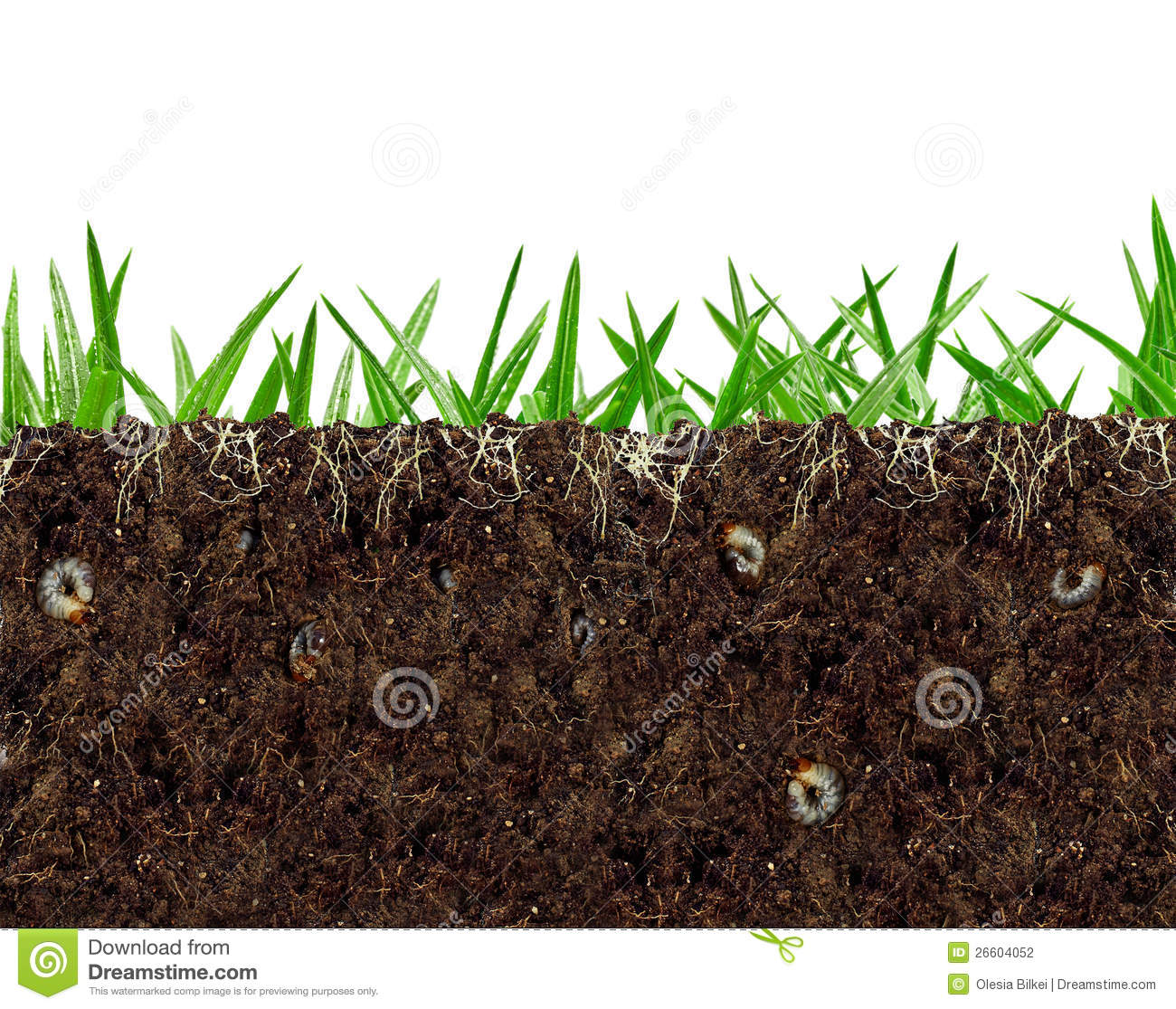 Clip Art Soil Clipart soil clipart kid inside view of vital