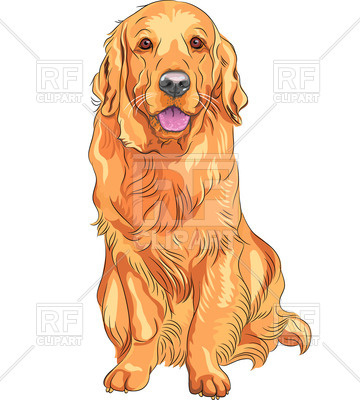 Of Golden Retriever Breed Download Royalty Free Vector Clipart  Eps
