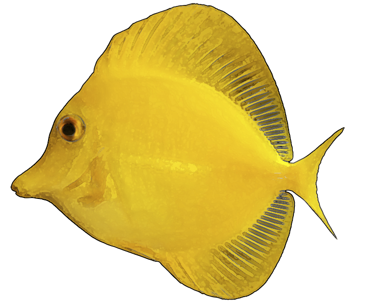 Yellow fish clipart clipart suggest for Yellow tropical fish