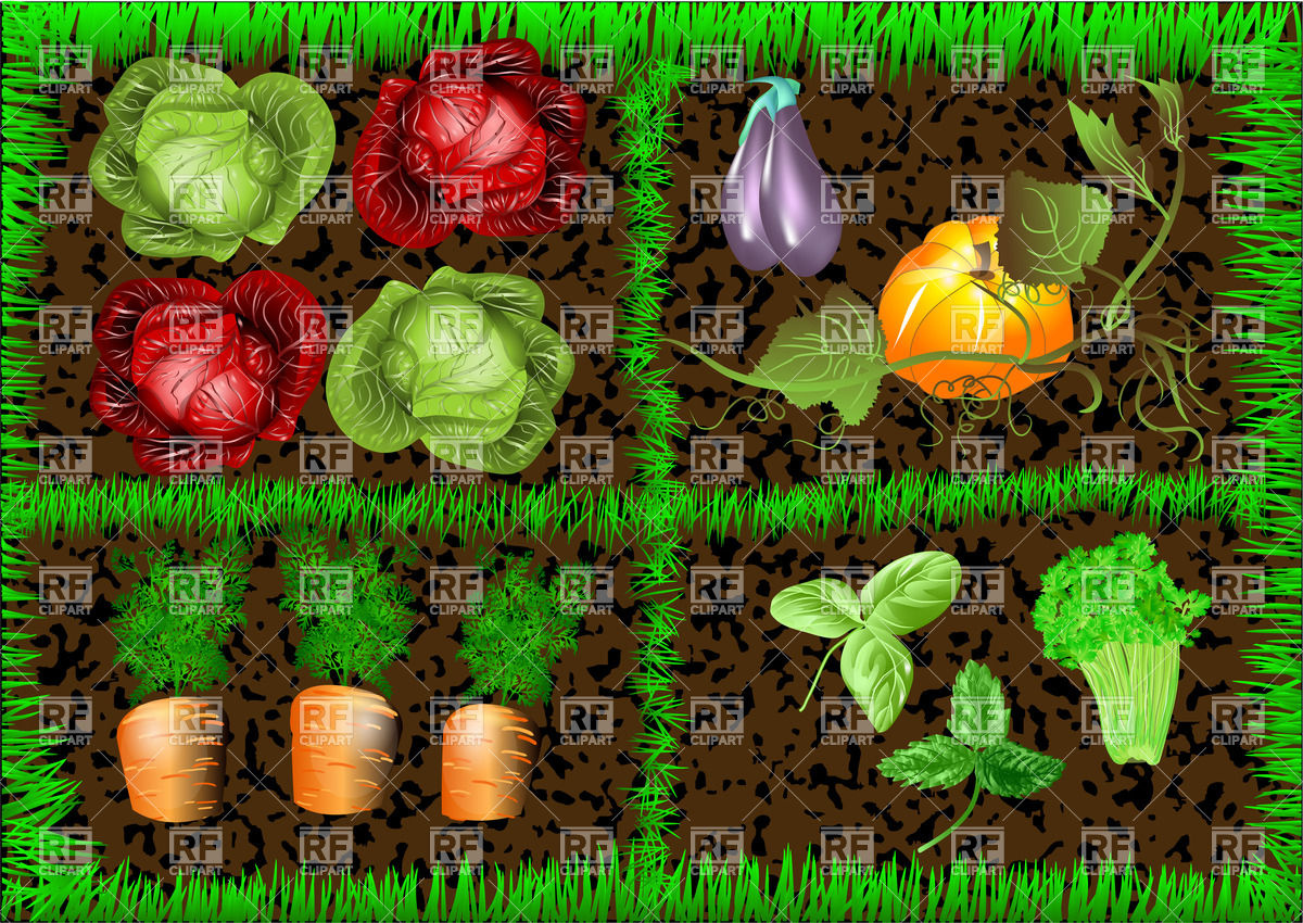 Vegetable Garden 27469 Food And Beverages Download Royalty Free