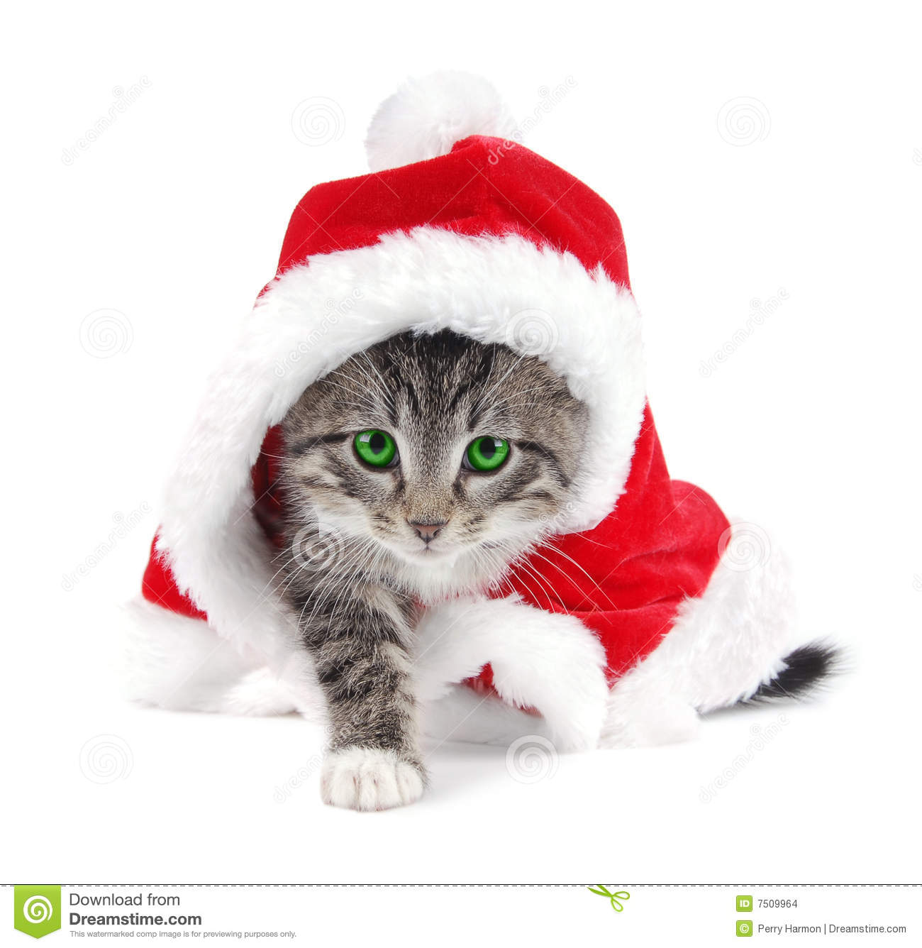 Christmas Kitten Clipart Green Eyed Tabby Kitten With