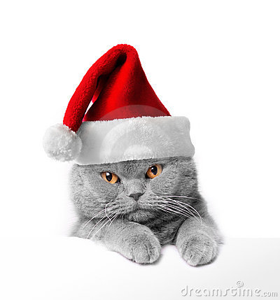 Cute Christmas Kitten Clipart