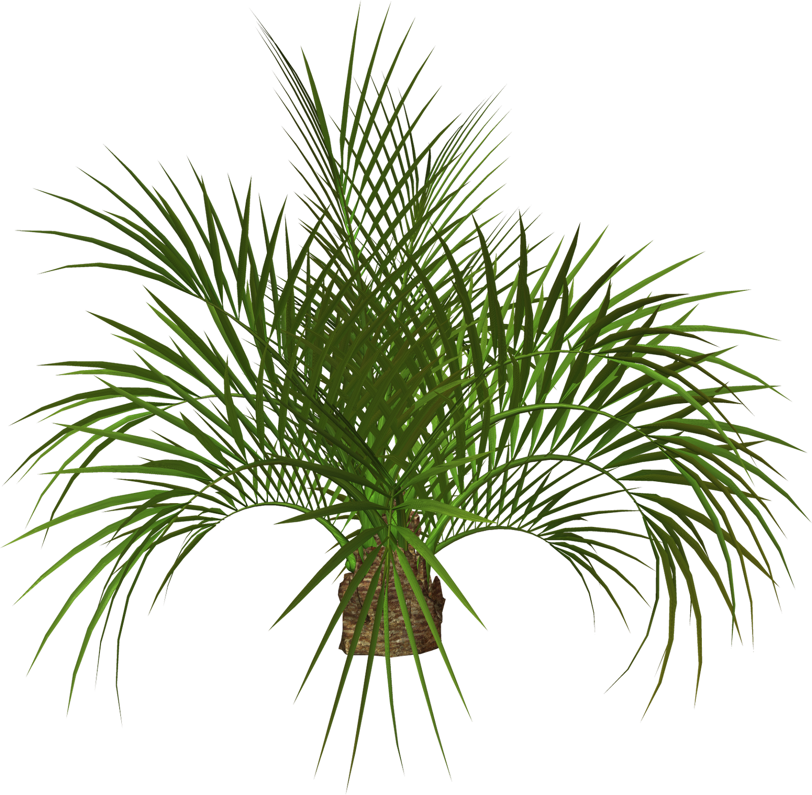 Palm Tree And Free Png Flower Clipart