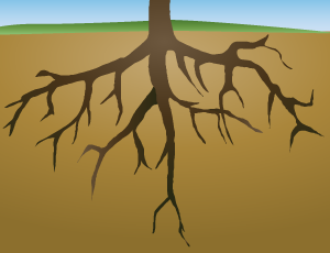 roots clipart clipart suggest