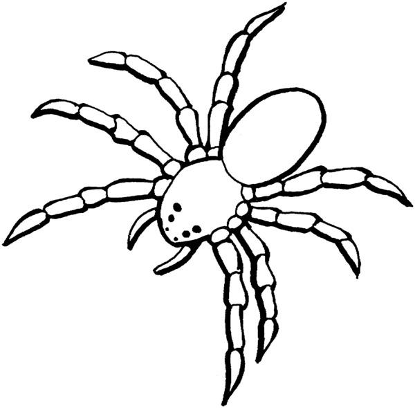 Раскраски пауки - 3