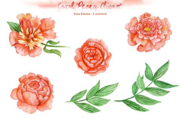 Watercolor Coral Peony Clipart   Illustrations On Creative Market