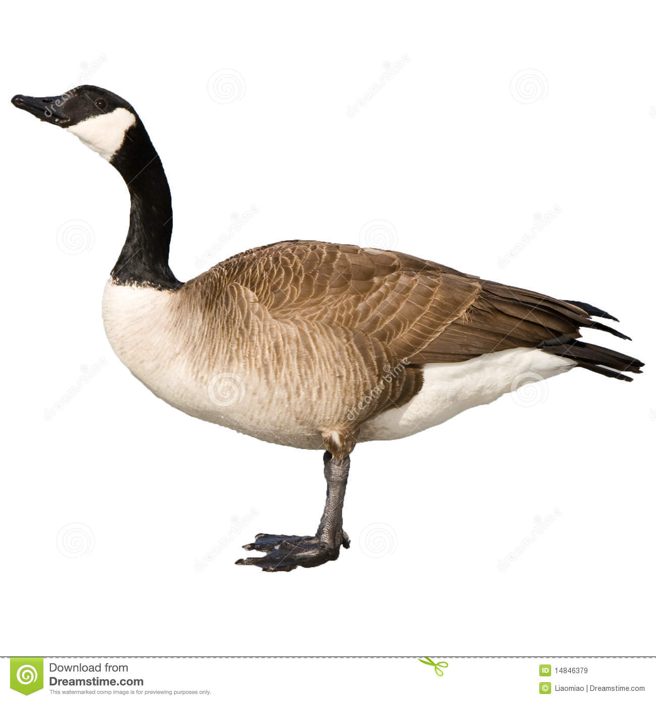 Canadian Goose Clipart - Clipart Kid