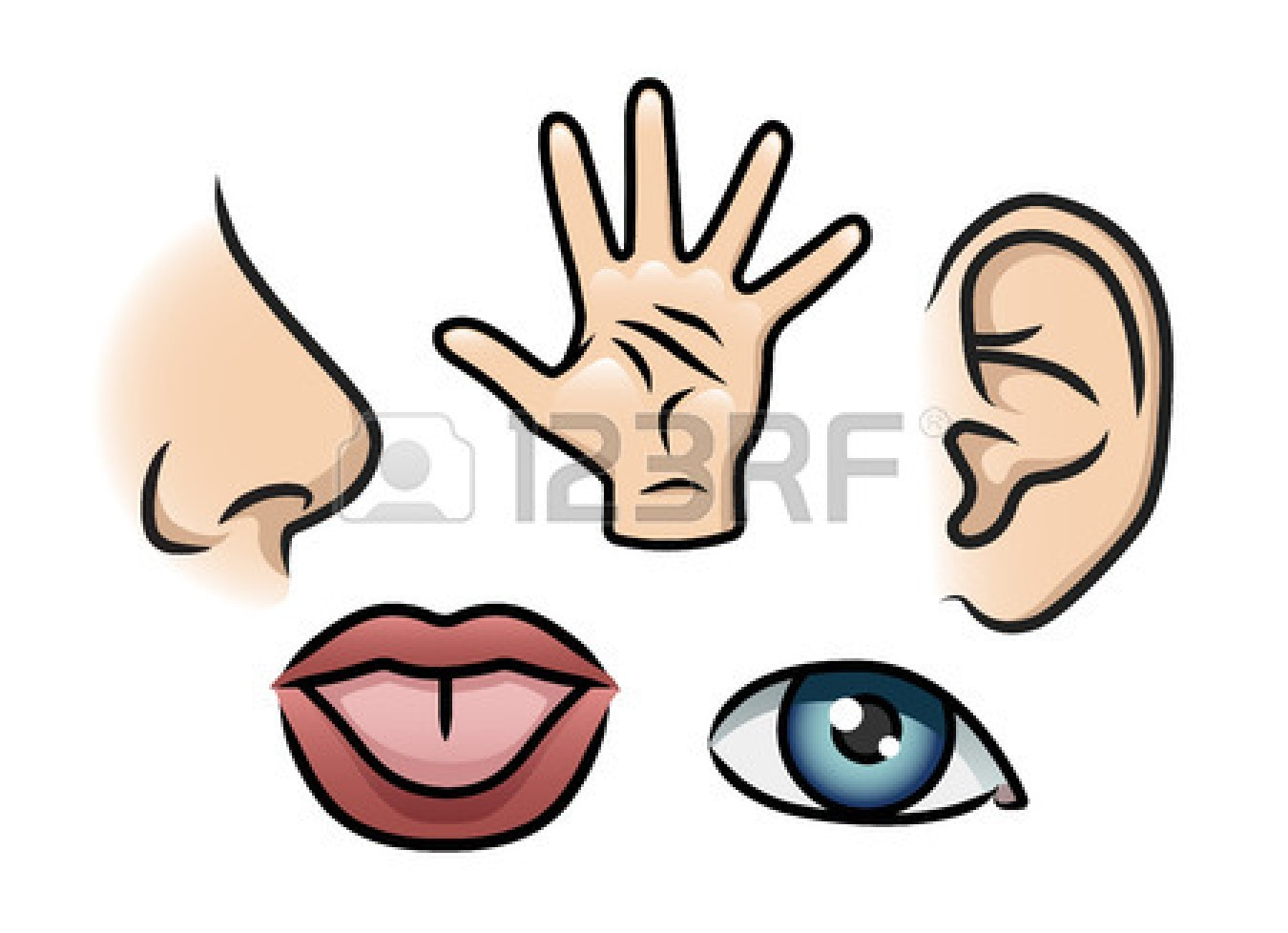 Touch Clipart 26573894 A Cartoon Illustration Depicting The 5 Senses
