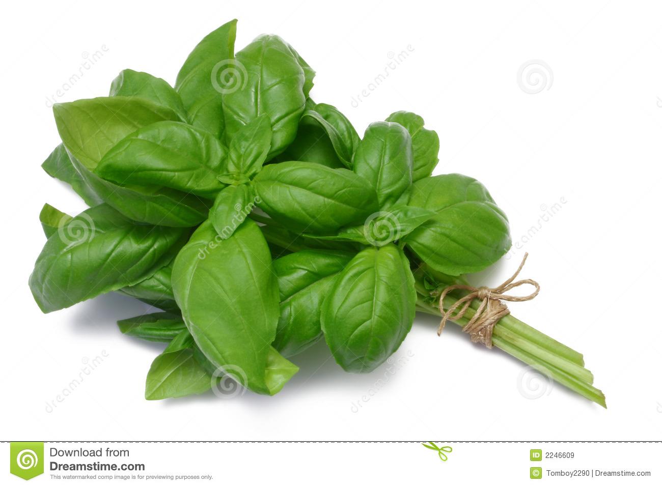 Basil Clipart Herb Series Basil
