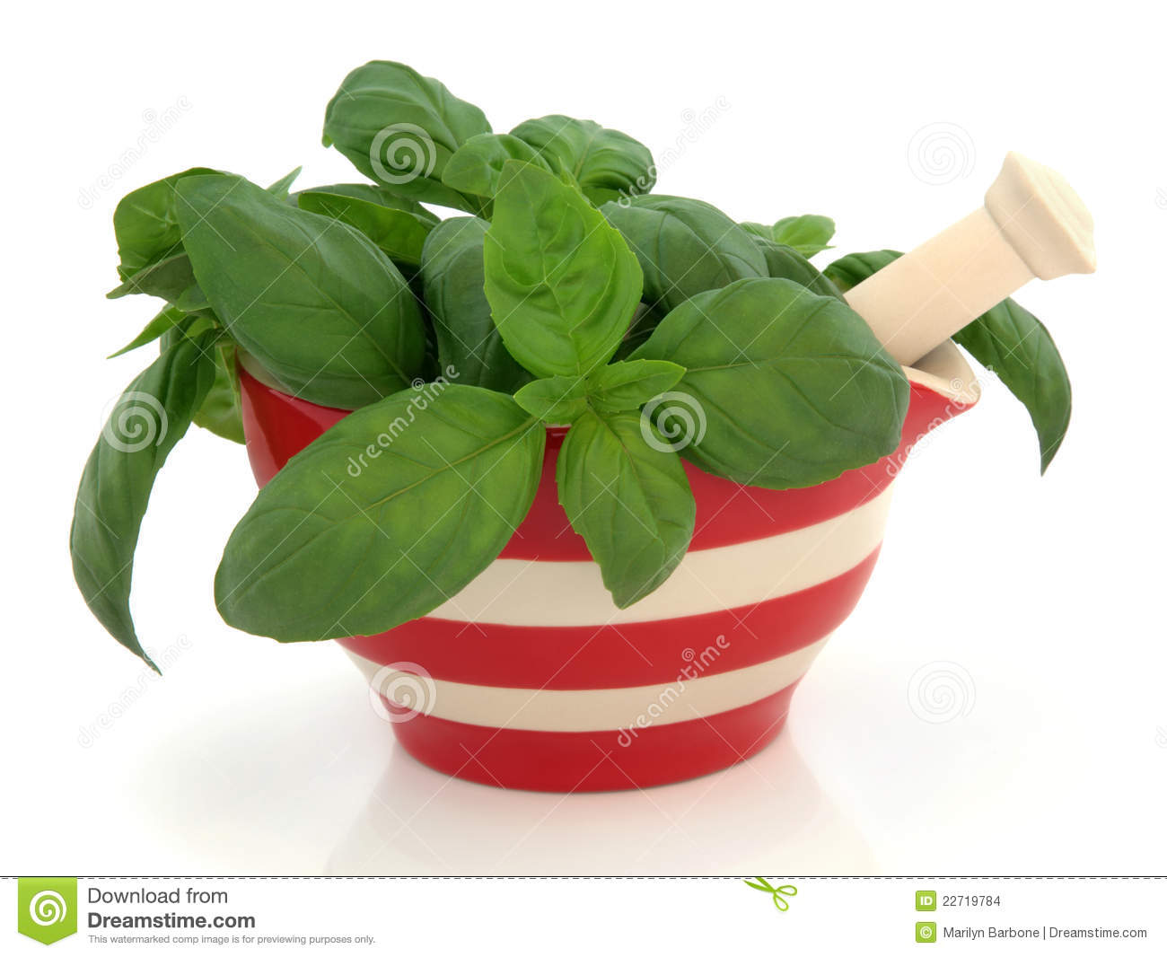 Basil Herb Leaf Sprigs In A Red And Cream Striped Mortar With Pestle