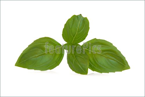 Basil Leaves Picture Of Herb Leaf Clipart