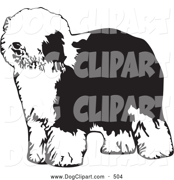 Clip Art Of A Cute And Hairy Dulux Or Old English Sheepdog Standing