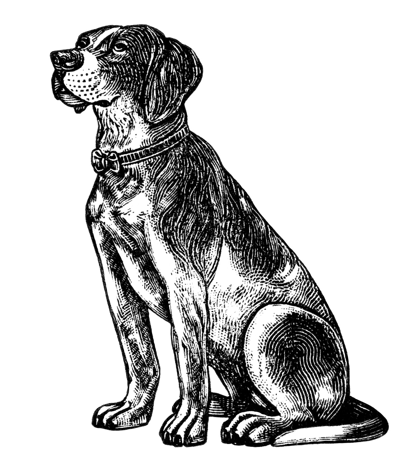Dogs Clip Art The Dog Was 6 1 2 Inches High