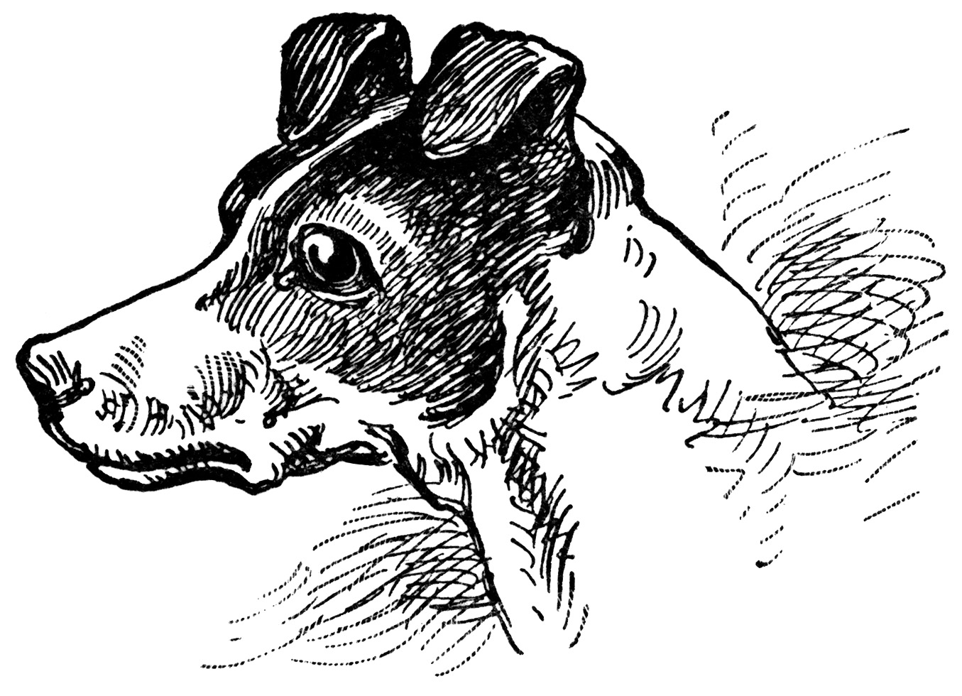 Old Dog Clipart Dog And Cat Clip Art Black And White   Hvgj