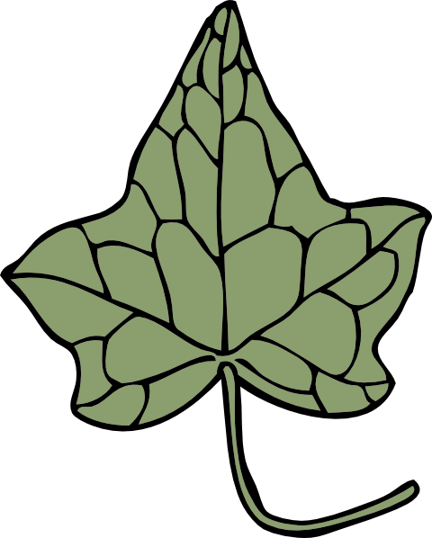 Oak Ivy Leaf Clip Art At Clker Com   Vector Clip Art Online Royalty
