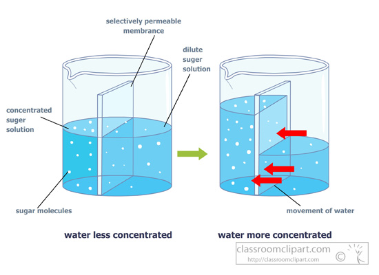 Science   Osmosis Diagram Semi Permeable Membrane   Classroom Clipart