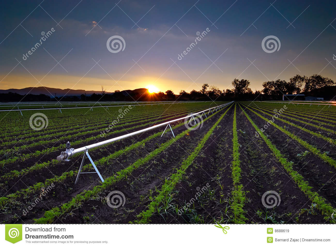Agricultural Irrigation Sprinkler Royalty Free Stock Images   Image