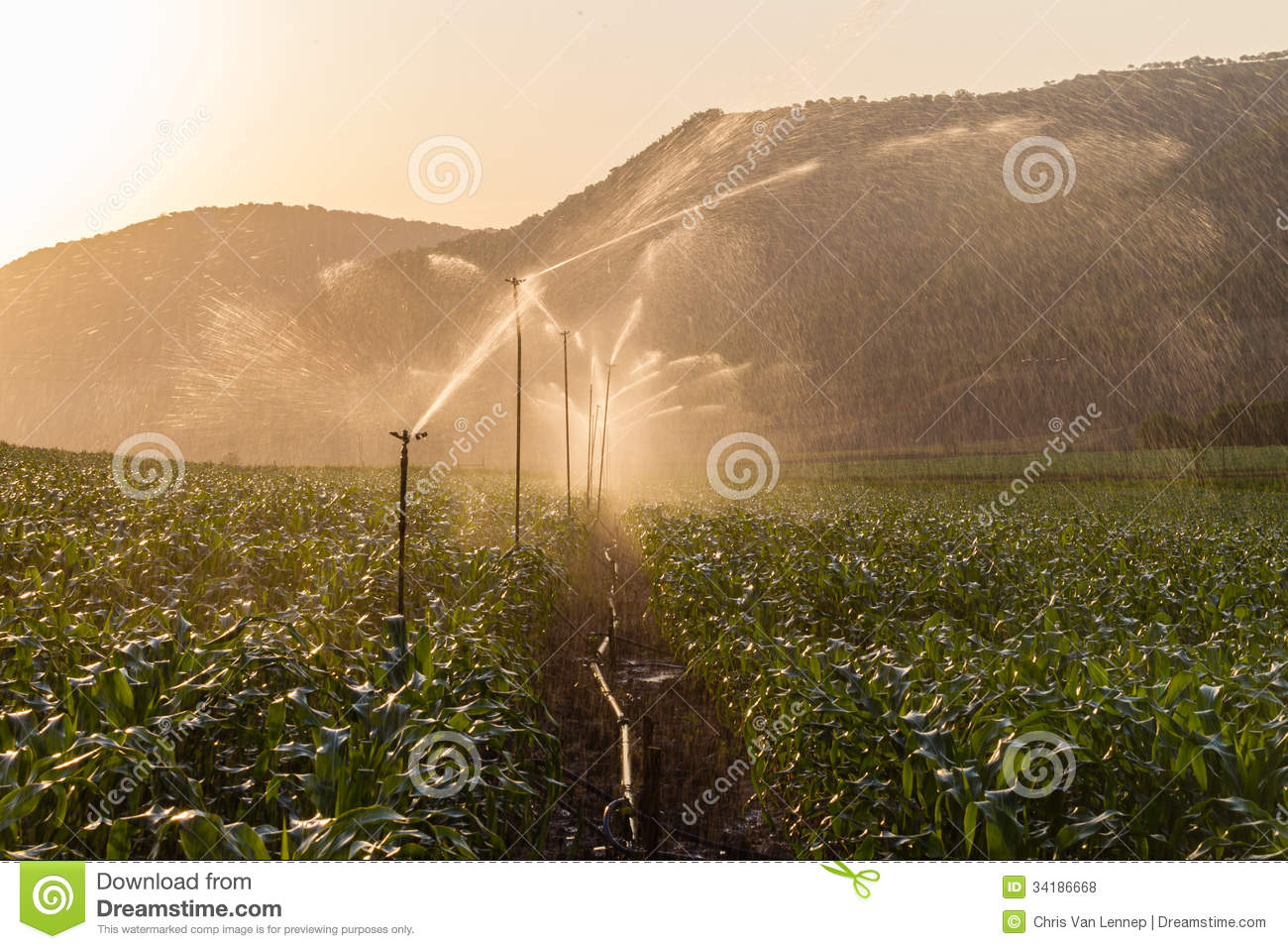 Farm Maize Crop Water Spray Sprinklers Royalty Free Stock Photos