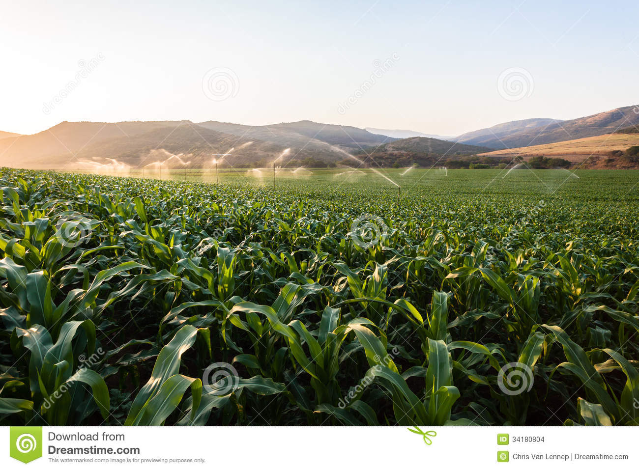 More Similar Stock Images Of   Farming Maize Crop Water Sprinklers