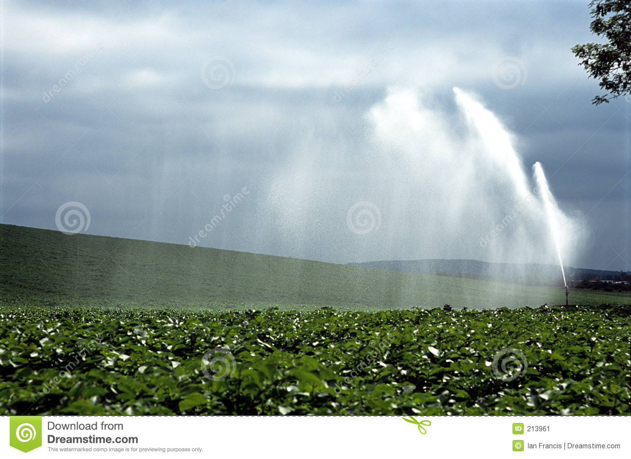 Water Crop Spraying  Stock Image   Image  213961