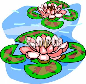Water Lilies On A Pond Clipart Picture