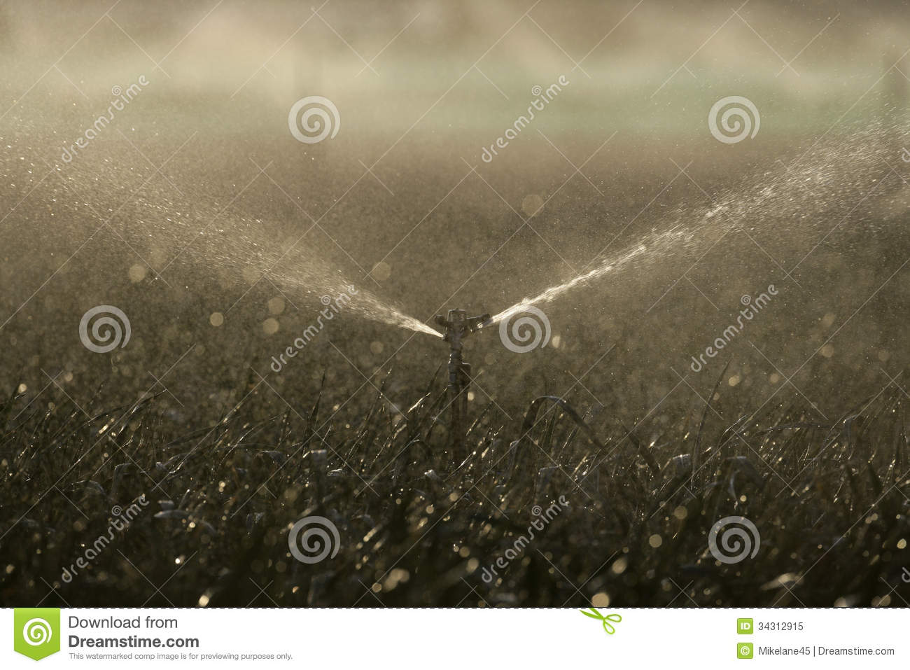 Water Sprinklers On Crops Royalty Free Stock Photo   Image  34312915