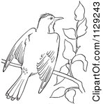Cartoon Clipart Of An Outlined Kingbird With Open Wings On A Branch