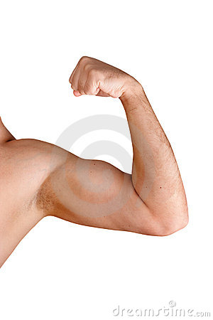 Flexing Biceps Isolated On White Stock Image   Image  17122521