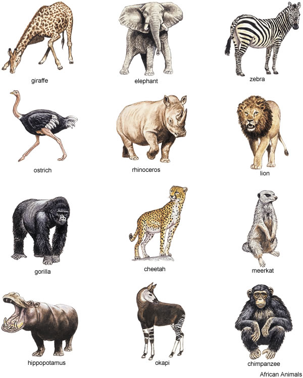 Clip Art Real Animal Clipart - Clipart Kid