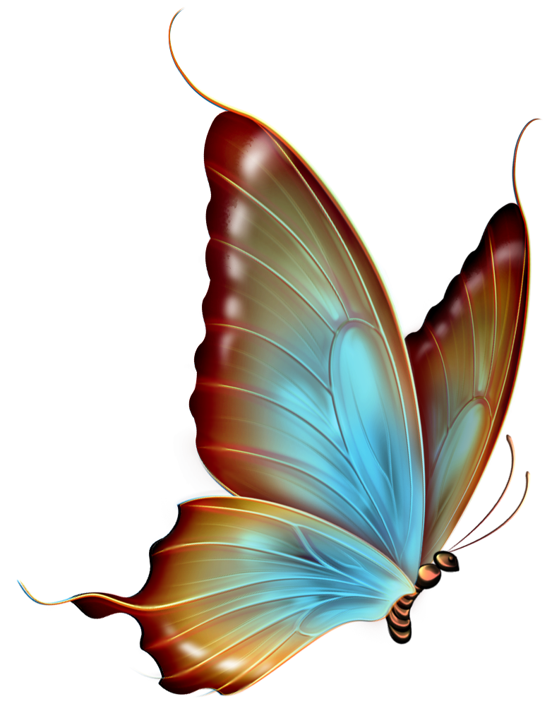 Butterfly Clip Art Free   Cliparts Co