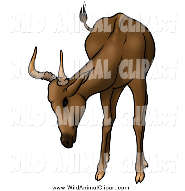 Clip Art Of A Brown Antelope With Short Antlers By Dero    1073