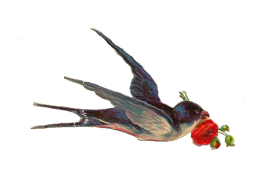 vintage bird clipart   clipart suggest