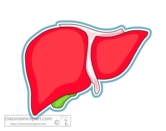 Liver Clipart - Clipart Suggest