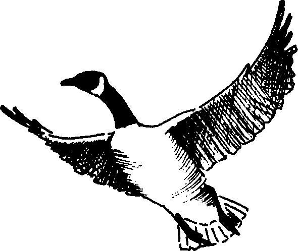Goose Clip Art Royalty Free   Clipart Panda   Free Clipart Images