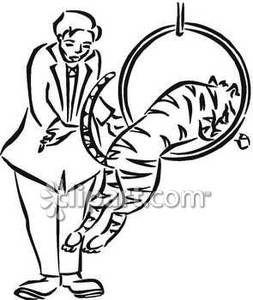 And White Tiger Jumping Through A Hoop   Royalty Free Clipart Picture