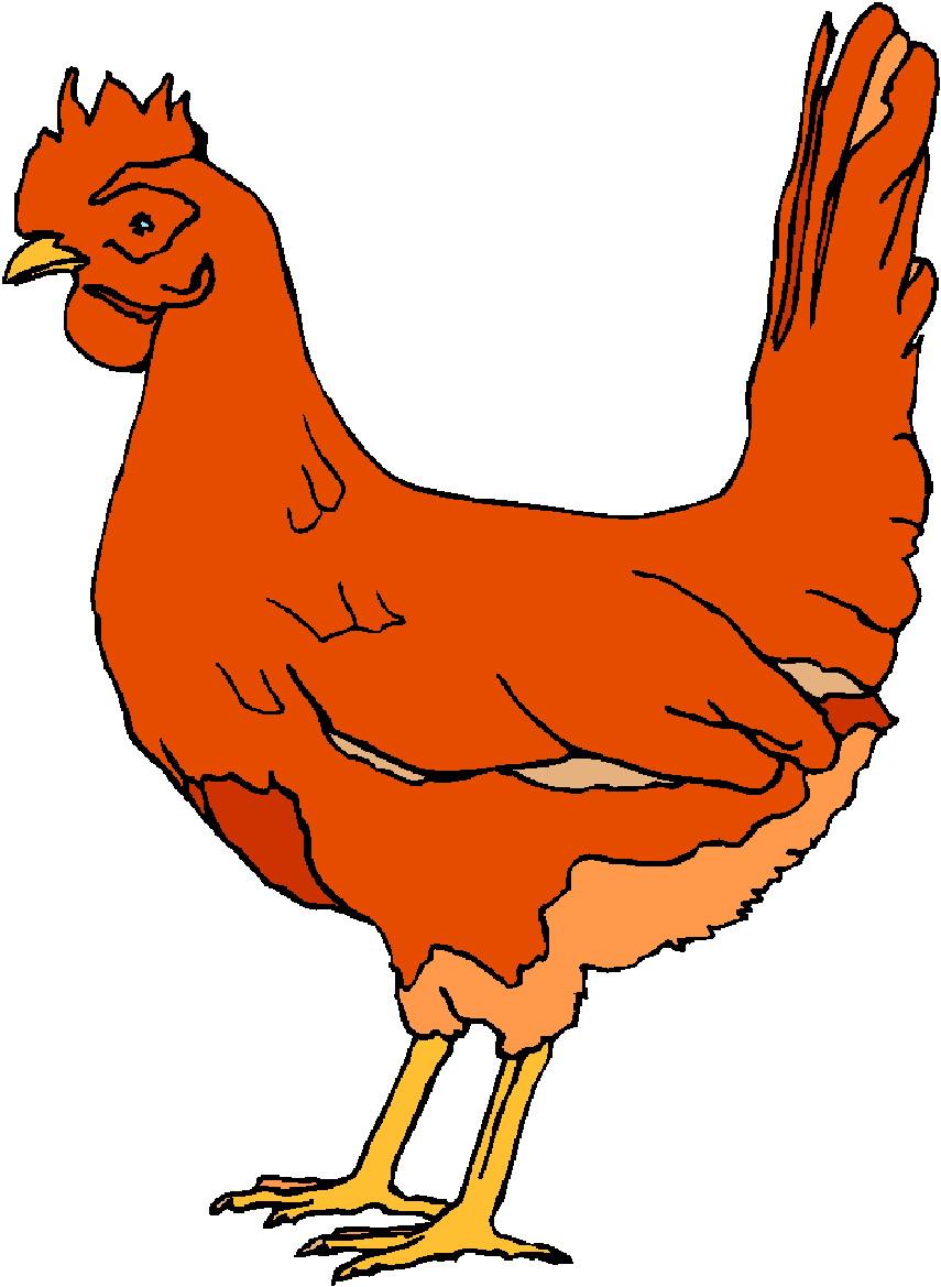 Clip Art   Clip Art Chickens 275928
